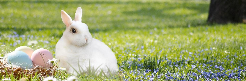 Kellemes Koronavírus mentes Húsvéti Ünnepeket